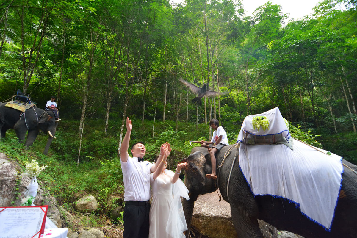 Wedding Ceremony Packages: Elephant Wedding Ceremony Packages : Krabi, Thailand